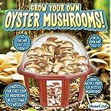 Dunecraft Grow Your Own Mushrooms Domed Terrarium