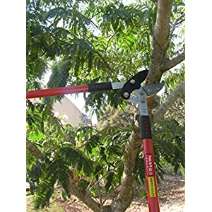 Tabor Tools GG12 Compound Action Anvil Lopper, Chops Thick Branches With Ease, 2-Inch Cutting Capacity, 30-Inch Tree Trimmer with Sturdy Professional Extra Leverage 22-Inch Handles.