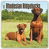 Rhodesian Ridgebacks 2018 12 x 12 Inch Monthly Square Wall Calendar, Animals Dog Breeds (Multilingual Edition)