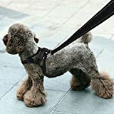 Dog Leash Harness, Ideapro Adjustable No-Pull Dog Leash Collar Harness With Handle on Top for Walking, Training--Best for Medium Small Dogs(Small)