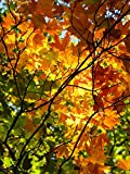 PHOTOGRAPHY TREE BRANCHES FALL AUTUMN NEW FINE ART PRINT POSTER PICTURE 30x40 CMS CC3785