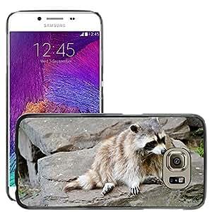 Super Stella Slim PC Hard Case Cover Skin Armor Shell Protection // M00147249 Raccoon Wash-Bear Animal Wildlife // Samsung Galaxy S6 (Not Fits S6 EDGE)