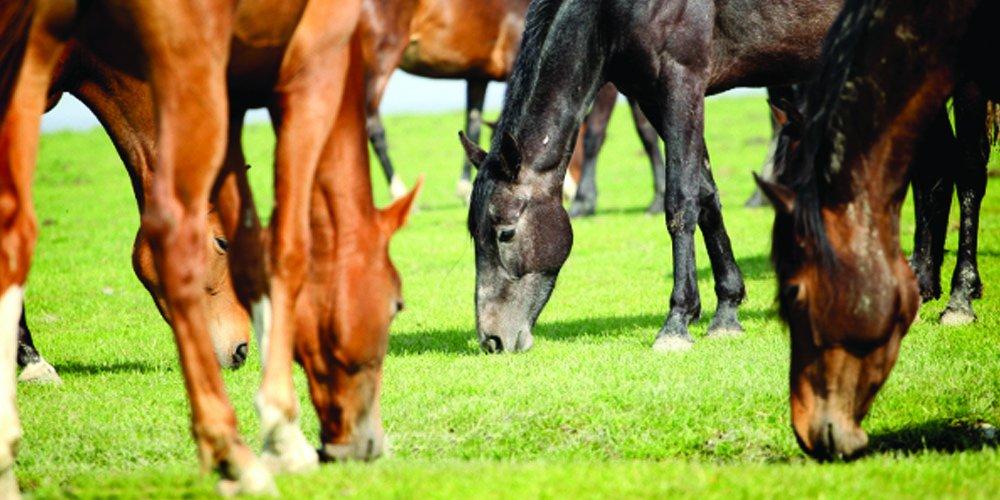 Nature's Seed 1 Acre Florida Tropics Horse Pasture Blend