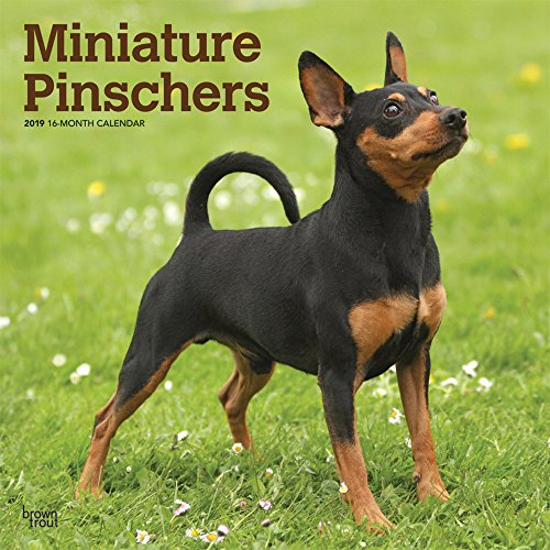Miniature Pinschers 2019 12 x 12 Inch Monthly Square Wall Calendar, Animals Dog Breeds (Multilingual Edition)