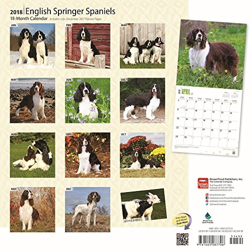 English Springer Spaniels 2018 Wall Calendar Photo #3