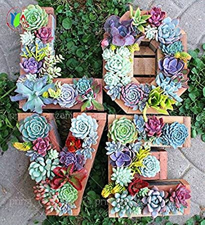 200 Bag Mix Succulent Seeds Lotus Lithops Pseudotruncatella Bonsai