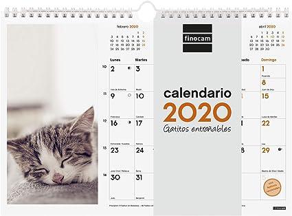Finocam - Calendario de pared 2020 Imágenes Espiral 30x21 Gatitos español: Amazon.es: Oficina y papelería