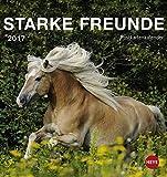 Pferde Postkartenkalender - Kalender 2017