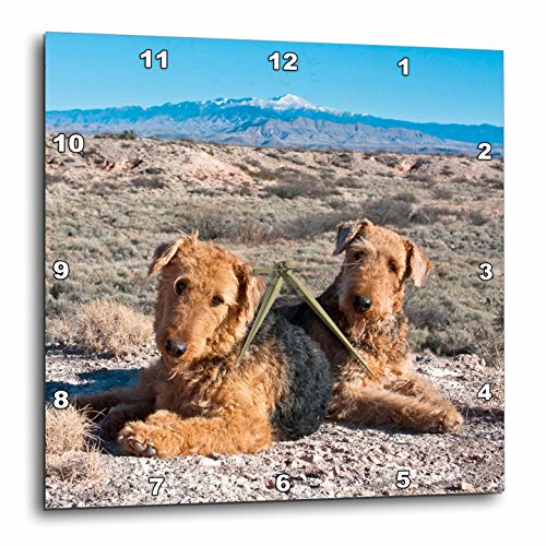(3dRose dpp_93018_1 Airedale Terrier Dogs, New Mexico-US32 ZMU0027-Zandria Muench Beraldo-Wall Clock, 10 by 10-Inch)