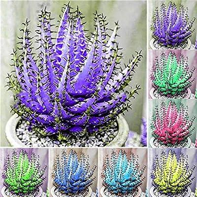 Caiuet 100Pcs Mixed Colorful Aloe Vera Seeds Succulent Plant Perennial Anti-Radiation Home Garden Seeds Bonsai Balcony Wonderful Gardening : Garden & Outdoor