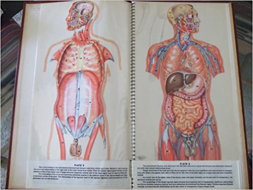 Anatomical Chromographs Of The Human Male The Human Female Trans