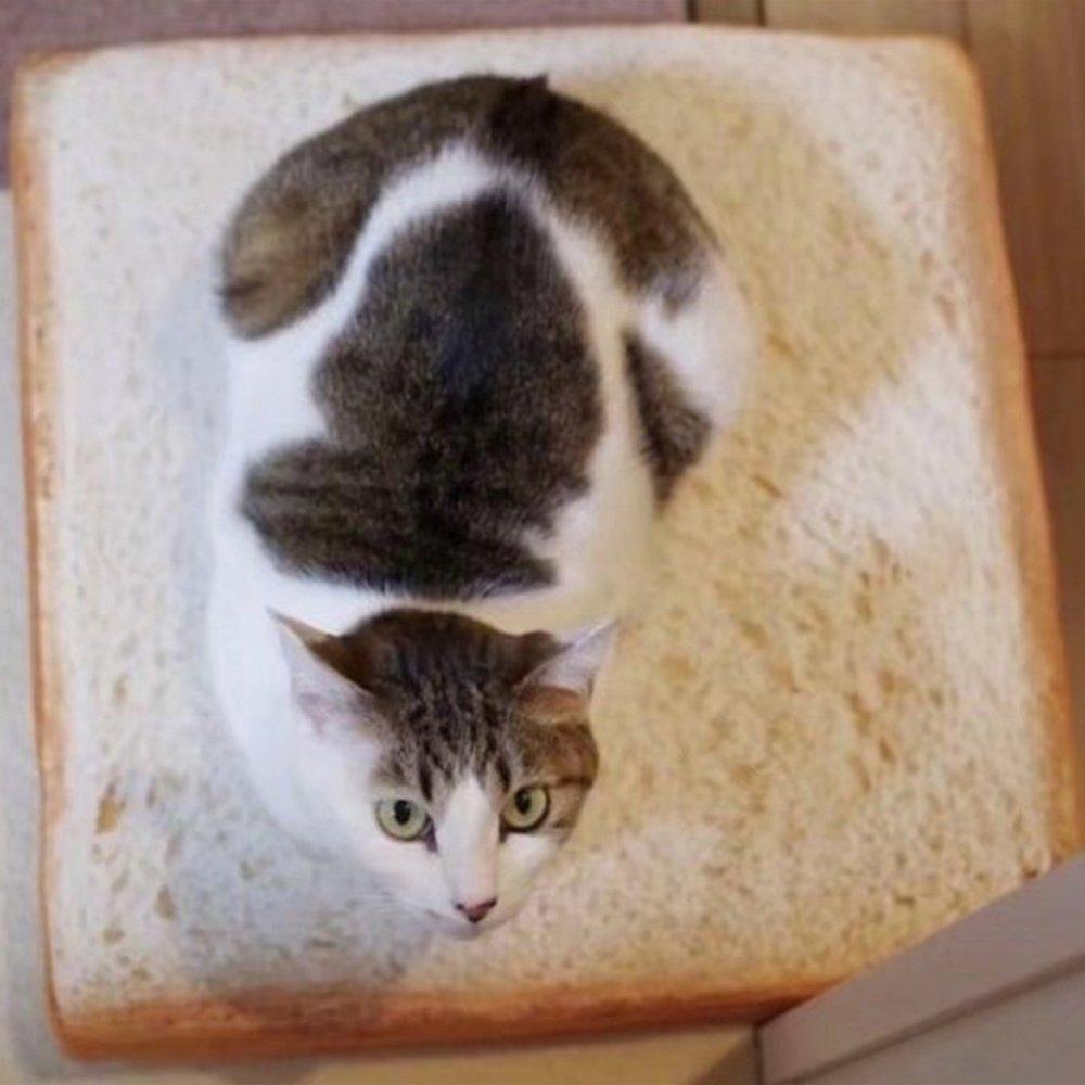 Xinjiener Toast Bread Slice Pet Cushion Soft Warm Colchón Nest Nest Kennel para Gatos Perros: Amazon.es: Productos para mascotas