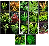 water heater birds - 50 Live Aquarium Plants / 17 Different Kinds - Amazon Swords, Anubias, Java Fern, Java Moss, Ludwigia and more! Great plant sampler for 40-45 gal. tanks.