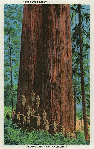 (Boy Scout Tree on Redwood Highway (12x18 Art Print, Wall Decor Travel Poster))