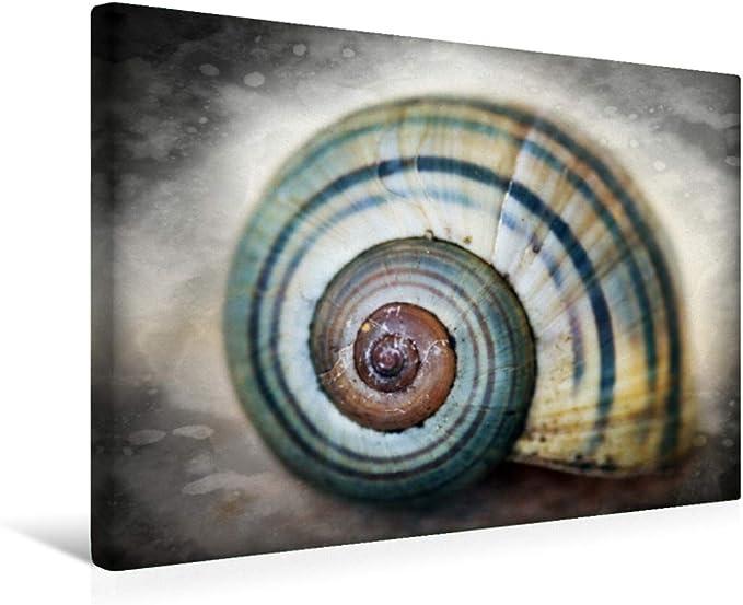 Premium - Lienzo textil, 45 x 30 cm, horizontal, diseño de casas de caracol, imagen sobre bastidor, imagen sobre lienzo auténtico, impresión en lienzo (animales calvendo), diseño de animales calvendo