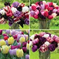 100 Bulbs Tulip Assorted Flower Arranger's Tulip Collection