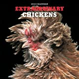 Extraordinary Chickens 2018 Wall Calendar