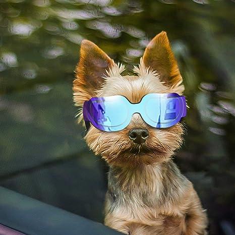 TUOGONGBAO Suministros para Mascotas Gafas para Perros de ...