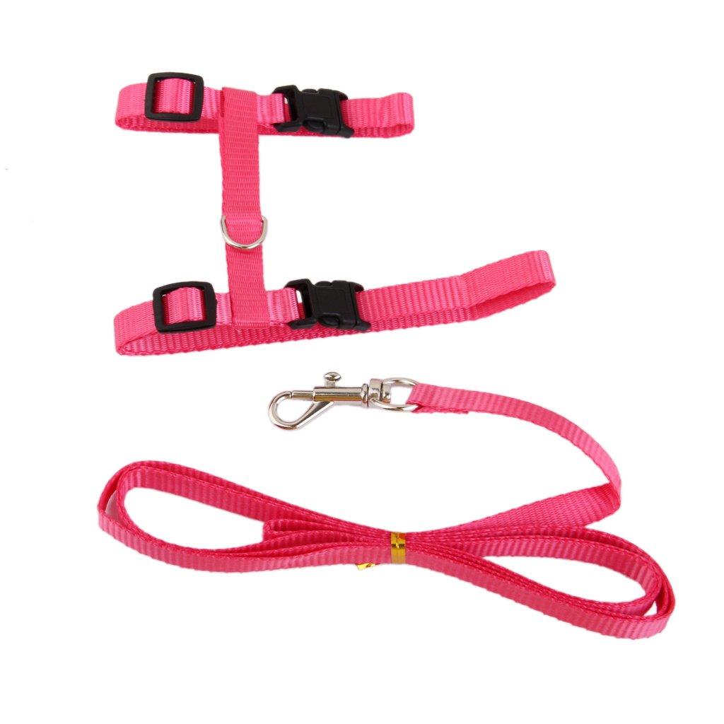 Cuello De La Correa De Nylon Cinturon Ajustable Gato Seguridad ...