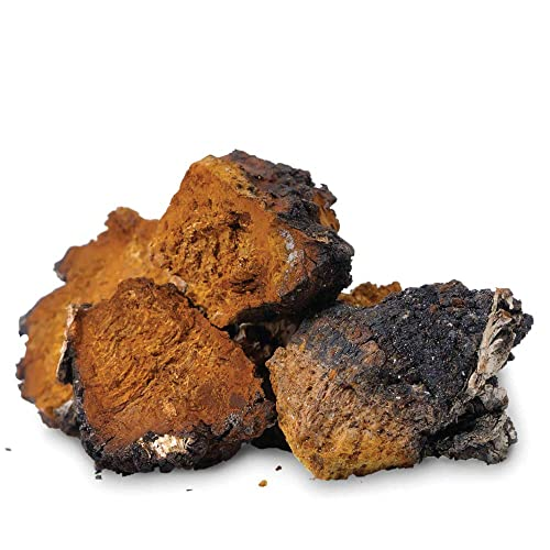 Tealyra – Chaga Chunks – Pure Raw Wild Harvested Canadian Chaga – Mushroom Tea – Superfood – Healthy Immune Booster Antioxidant – 450g 1-Pound