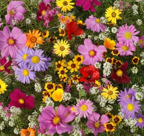 2000+DRYLAND Area Wildflower Mix 21 Different Flowers Butterflies Bees Wildlife