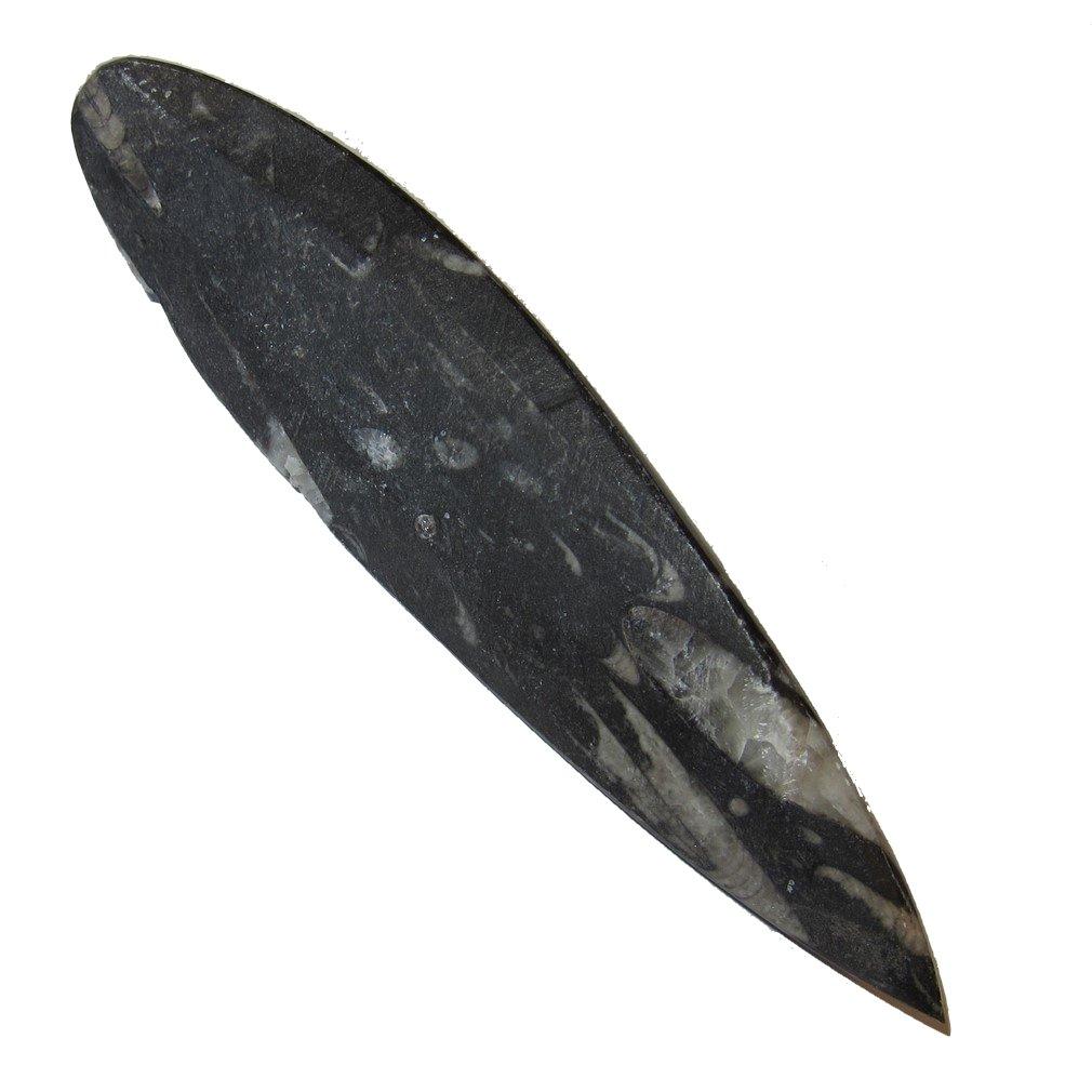 Amazon.com: Fossil Wand 51 antigua Orthoceras hueso piedra ...