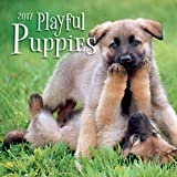 Turner Photo 2017 Playful Puppies Photo Wall Calendar, 12 x 24 inches opened (17998940045)
