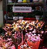 Roleadro HYG08-2X400W-W 800W COB Full Spectrum Grow Light LED Plant Lamp with ON/Off Switch and Daisy Chain Function, 2nd Generation Flowering and Veg