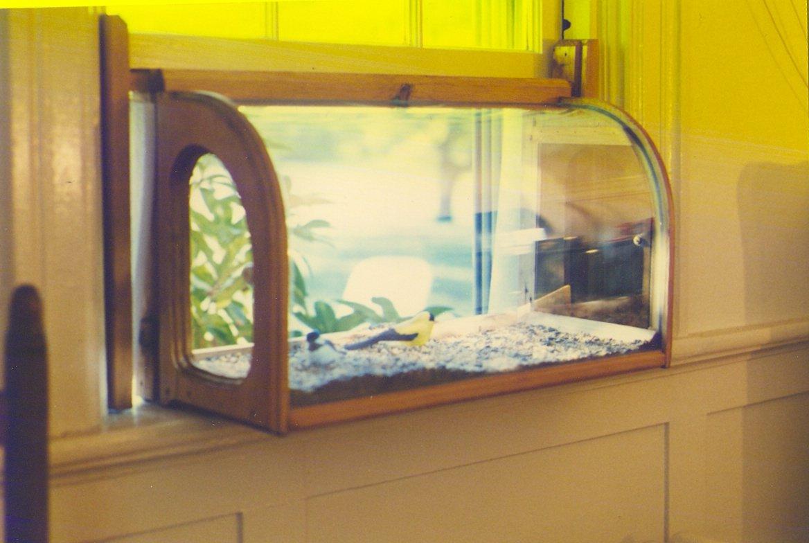 Window bird house - Amazon Com Best Selection Aviarium In House Window Sill Bird Feeder Wild Bird Feeders Patio Lawn Garden