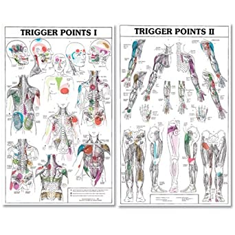 Trigger points i and ii laminated chart posters amazon com