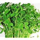 Ultimately Simple Microgreen and Sprout Kit (1)
