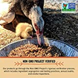 Scratch and Peck Feeds Naturally Free Organic Layer Feed for Chickens and Ducks - 25-lb (2-Pack) - Non-GMO Project Verified, Soy Free and Corn Free - 2004-50