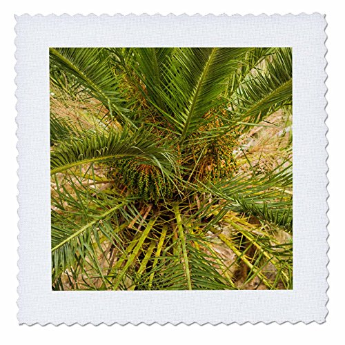 3dRose Danita Delimont - Trees - Spain, Canary Islands, La Gomera, Vallehermoso, palm tree detail - 22x22 inch quilt square (qs_257882_9) by 3dRose