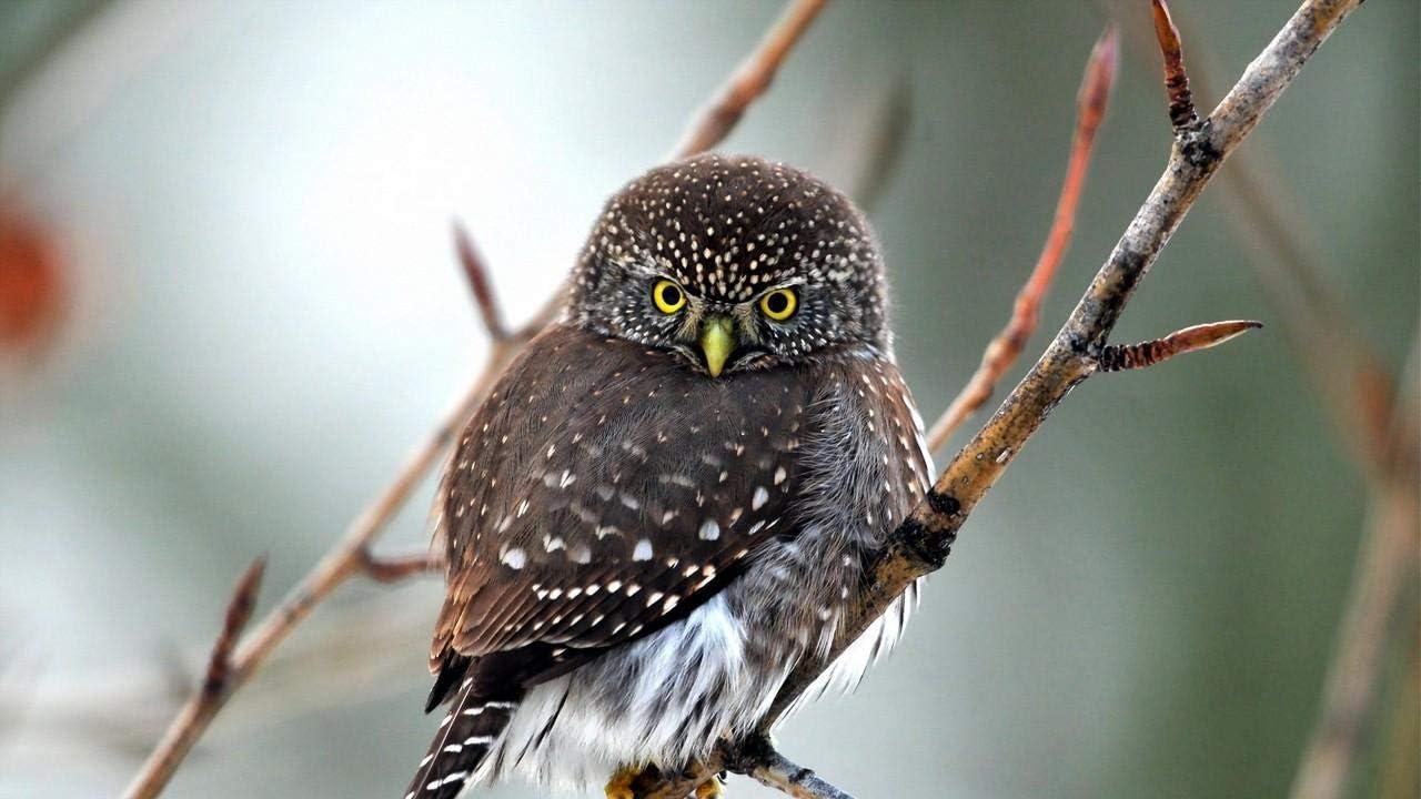 YINGXINXWM Pintura por Números Bricolaje Personalizada Pintar WL Pájaro Depredador Ojos para Principiante Decoración Hogareña 40X50Cm(Sin Marco)
