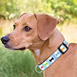 Illumifun Dog Collar Nylon Blue Bone Printed Adjustable Pet Collars for Small Medium Large Girl & Boy Dogs (XL, Blue Bone)