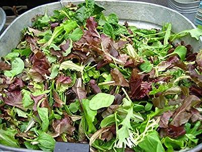 Salad Garden Seeds - Mesclun Mix - Gourmet Greens - Heirloom Varieties - Liliana's Garden