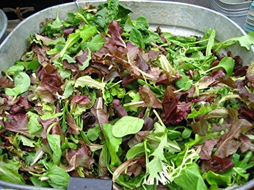 Salad Garden Seeds - Mesclun Mix - Gourmet Greens and Lettuce Alternative - Heirloom Varieties - Liliana's Garden