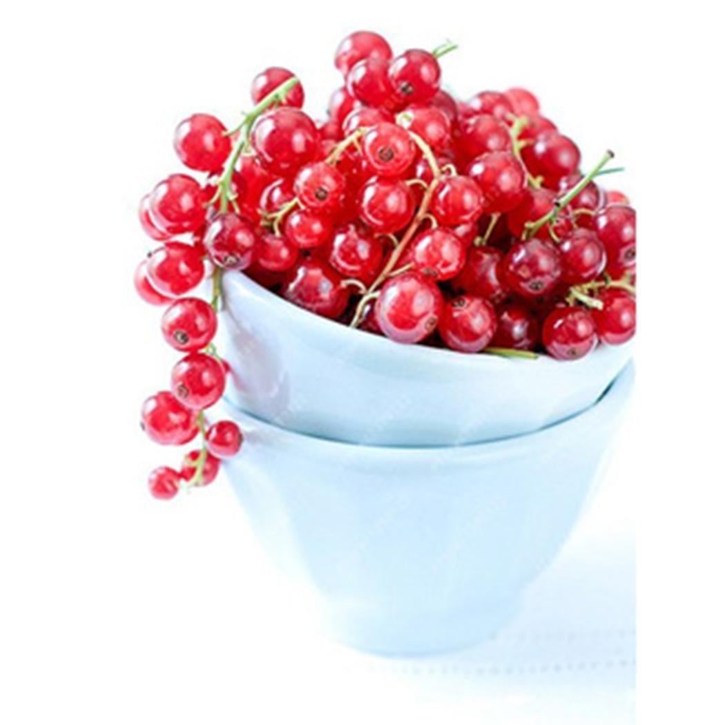 mymotto 50/pcs Org/ánica Ribes granate frutas semillas casa jard/ín Bonsai planta semilla de frutas