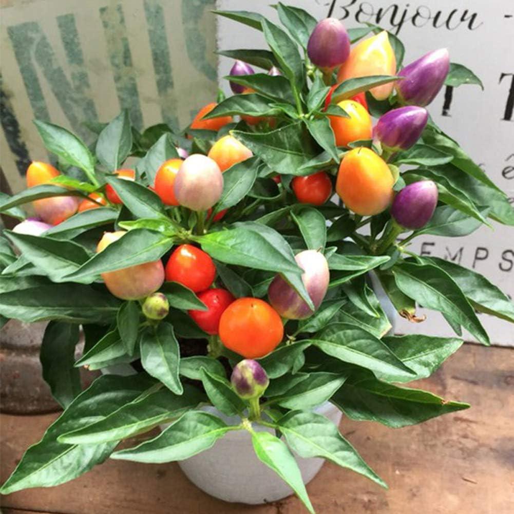 bio Capsicum frutescens L/égumes fruitiers color/és Graines de plantes de piment frais bio Premium pour la plantation de jardin D/écor ext/érieur Graines de poivre arc-en-ciel 50