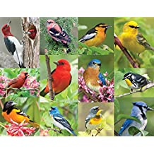 Springbok Puzzles - Birds of a Feather - 500 Piece Jigsaw Puzzle - Large 18 Inches by 23.5 Inches Puzzle - Made in USA - Unique Cut Interlocking Pieces