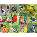 Springbok Birds of a Feather Jigsaw Puzzle (36-Piece )