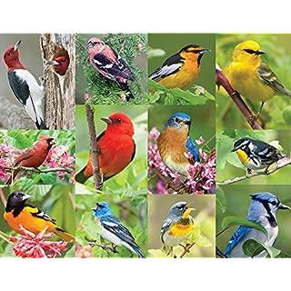 Springbok 36 Piece Jigsaw Puzzle Birds of a Feather, Multi, 500