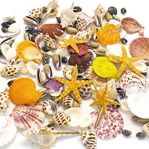 Sea Shells Mixed Beach Seashells, Colorful Natural Seashells Perfect Accents for Candle Making,Home Decorations, Beach Theme Party Wedding Decor, DIY Crafts, Fish Tank and Vase Fillers (80 Seashells) ()