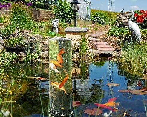 Goldfische im teich perfect goldfische im teich with for Kois und goldfische in einem teich