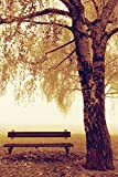 Park Bench Next to Tree Photography Decorative Art Poster Print 24x36