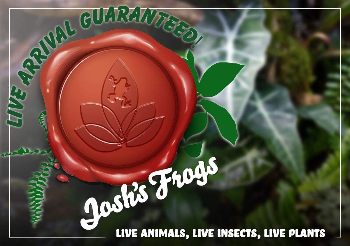 18x18x24 Day Gecko Vivarium Plant Kit