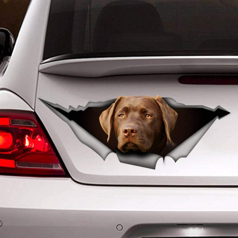 McC538arthy Decal Stickers for Cars Funny Window Decals Chow Chow Sticker Vinyl Decal Car Decoration Chow Chow Decal Dog Sticker Dog Decal Self Adhesive Window Sticker for Van Truck Vehicle
