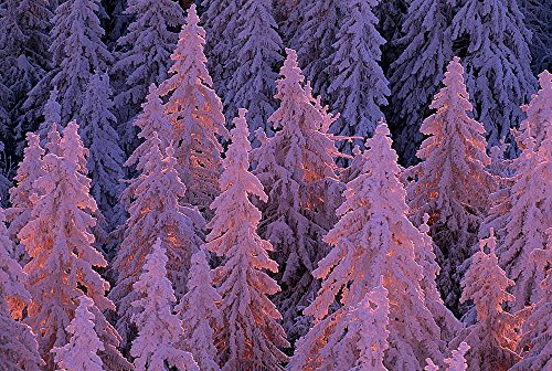 - Snow Covered Black Forest Wallpaper Wall Mural - Self-Adhesive - Multiple Sizes - National Geographic Image from Magic Murals
