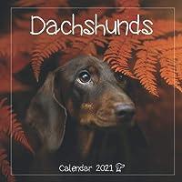 """Dachshunds: 2021 Wall Calendar - Large 8.5"""" x 17"""" When Open - 12 Months"""