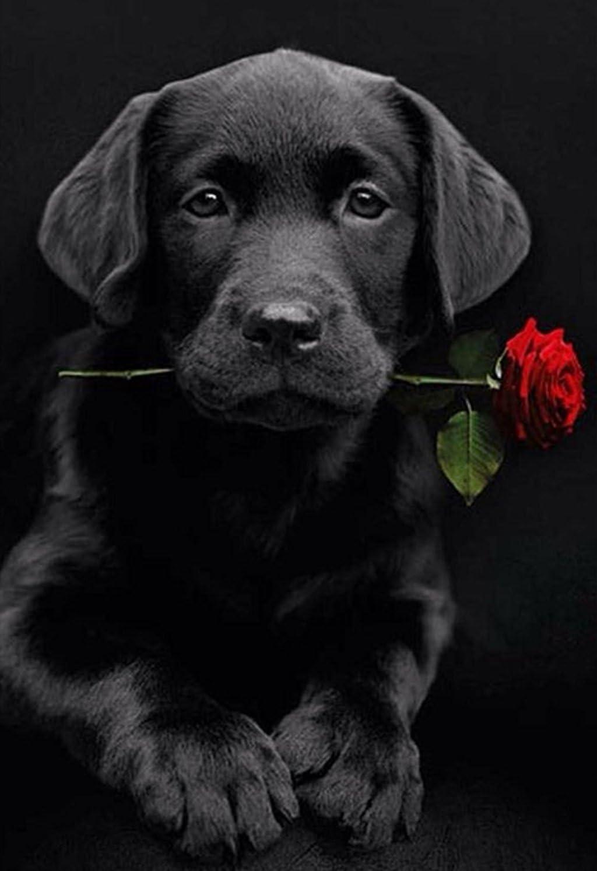 DIY 5D Diamant Painting - Hund mit Rose 30x40cm
